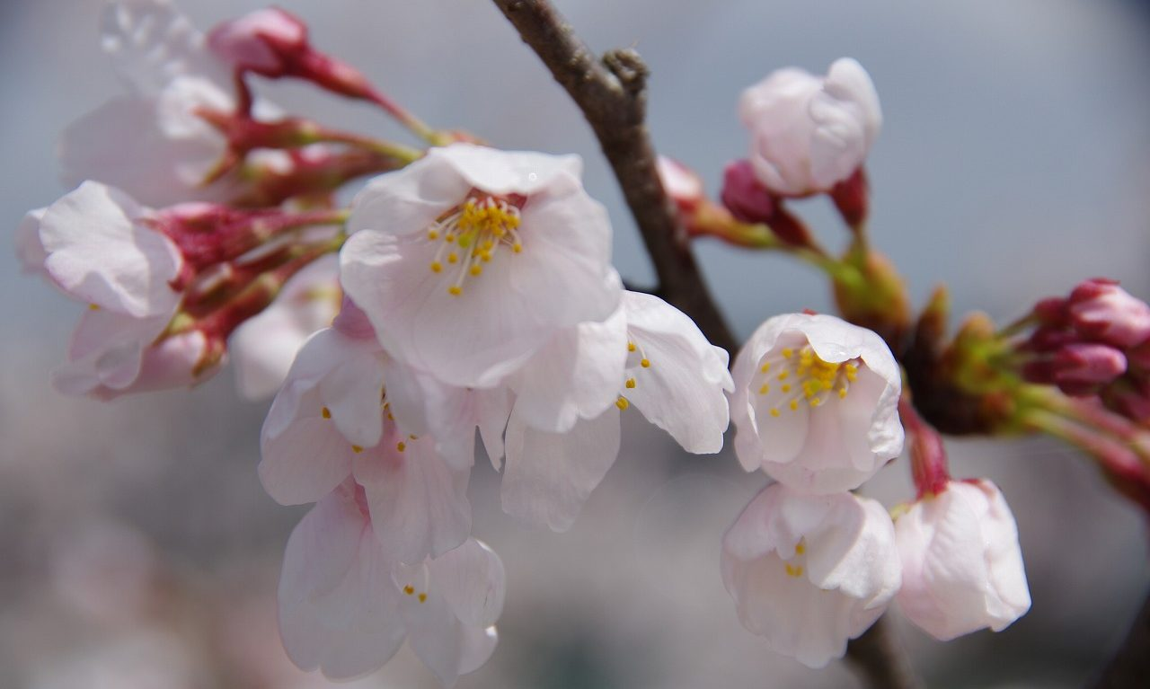 草花苑ブログ
